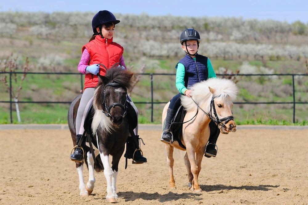 Equitation SEJ